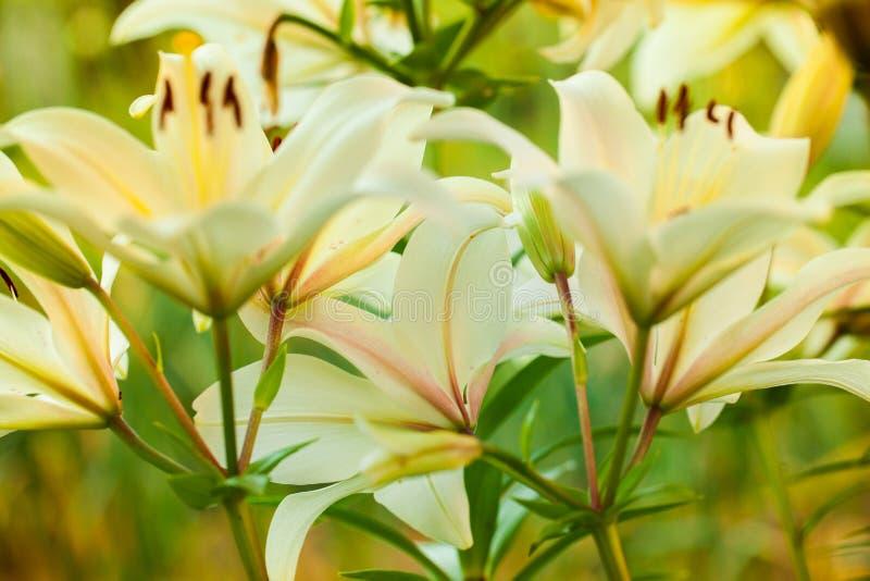 sköt stamens för blommafokus makro Naturbakgrundsfotografi Bred vinkel Lens som täckas av det Lens locket i mitt fotografering för bildbyråer
