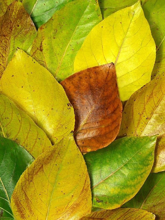 skład jesieni obrazy royalty free