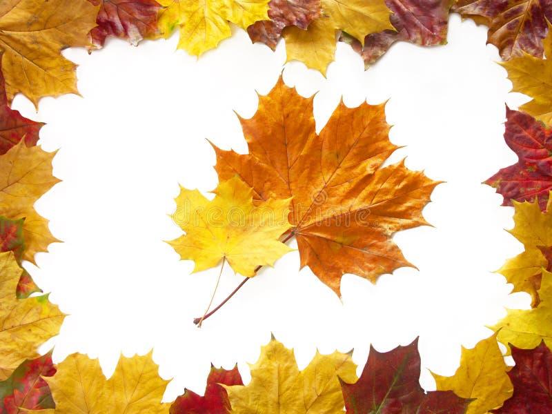 skład jesieni zdjęcie stock