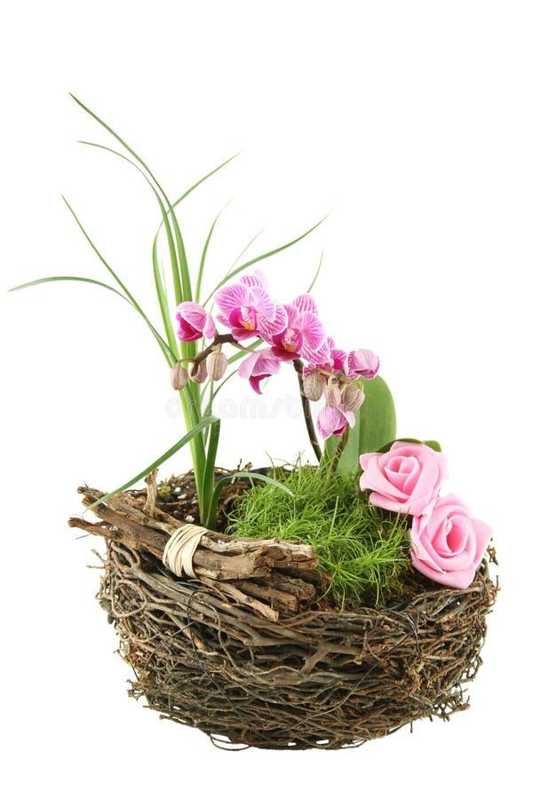 skład kwitnie rośliny obrazy royalty free