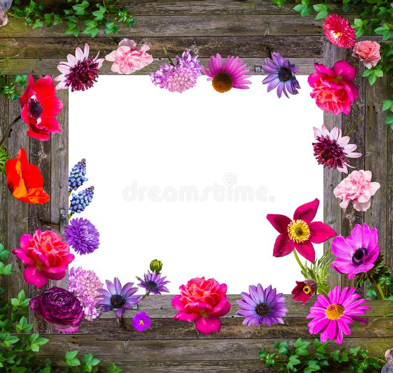 Skład ogród kwitnie na drewnianym tle obrazy stock
