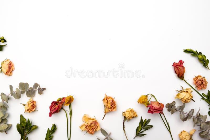Skład suszonych kwiatów Rama z suszonej róży Płaskie nieba, widok z góry Jesienny wzór kwiatowy fotografia royalty free