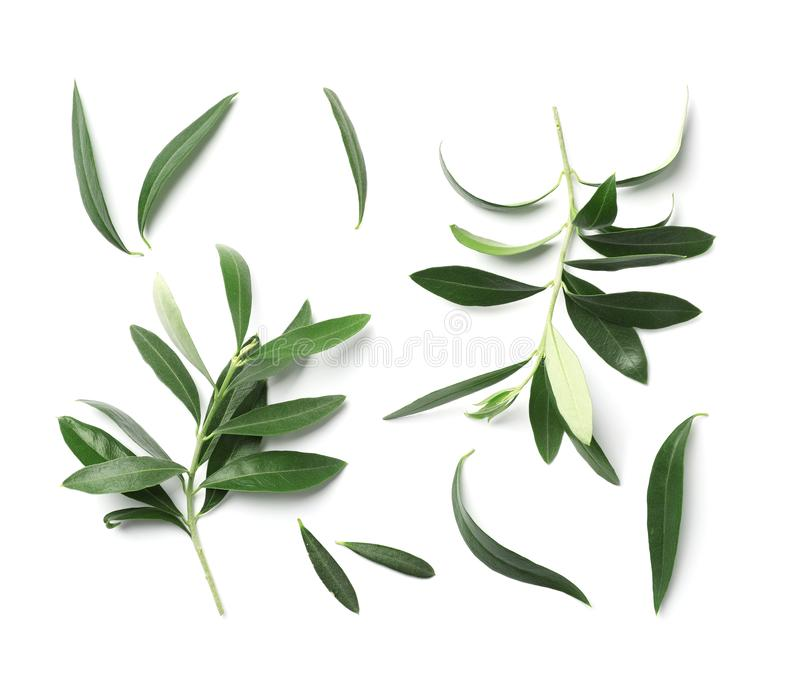 Skład z świeżą zieloną oliwką opuszcza i kapuje na białym tle obraz royalty free