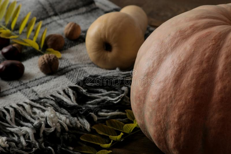 Skład z dyniową szkocką kratą cisawymi drzewami na drewnianym brązu stole i zdjęcia stock