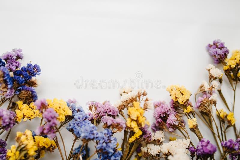 Składy suszący barwiący kwiaty na białym tle kosmos kopii kwitnie romantycznego Miejsce dla teksta i projekta zdjęcia stock