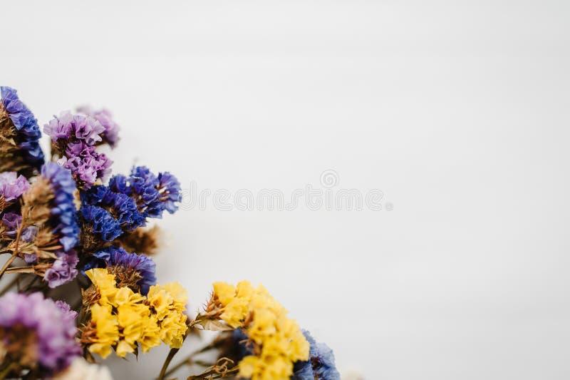 Składy suszący barwiący kwiaty na białym tle Romantyczni kwiaty dla teksta i projekta zdjęcie stock