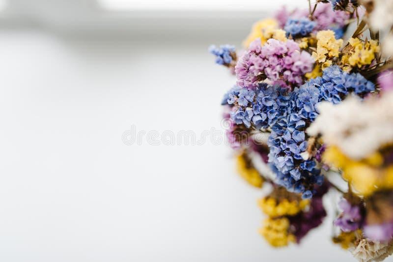 Składy suszący barwiący kwiaty stoi na białym tle stół kosmos kopii kwitnie romantycznego miejsce tekst obraz royalty free