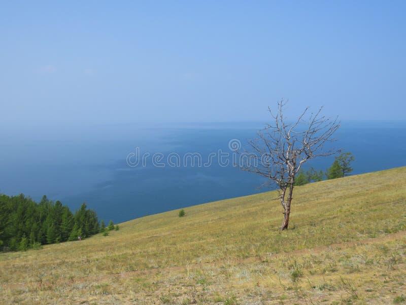 Skłon wzgórze, osamotniony suchy drzewo, widok jezioro Krajobrazowa Olkhon wyspa obrazy stock