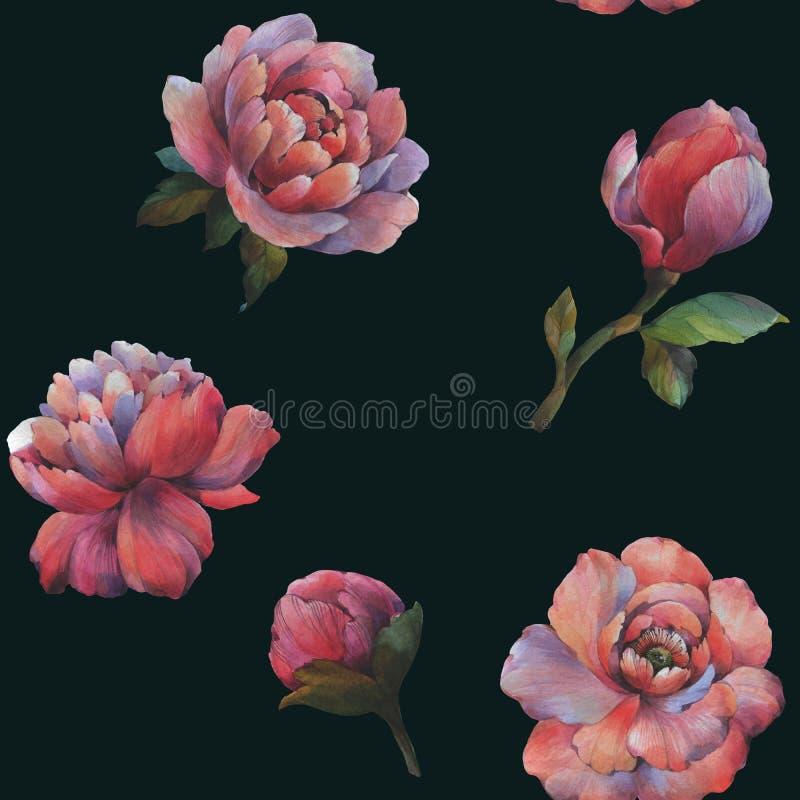 Sk?ad kwiaty peonia Bezszwowy akwarela wz?r kwiaty Botaniczny wz?r E ilustracji