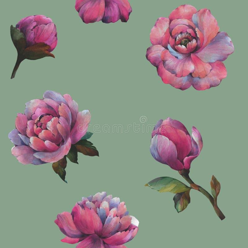 Sk?ad kwiaty peonia Bezszwowy akwarela wz?r kwiaty Botaniczny wz?r E ilustracja wektor