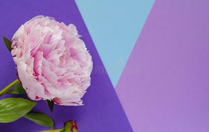 Sk?ad z kwiatami peonie Kobiet karty zdjęcie royalty free