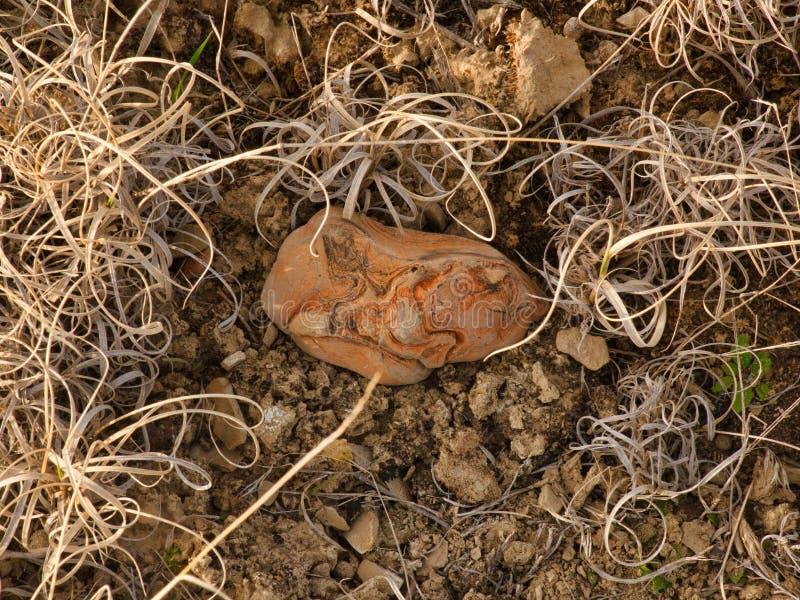 Skała, trawa i Pustynna ziemia, fotografia stock