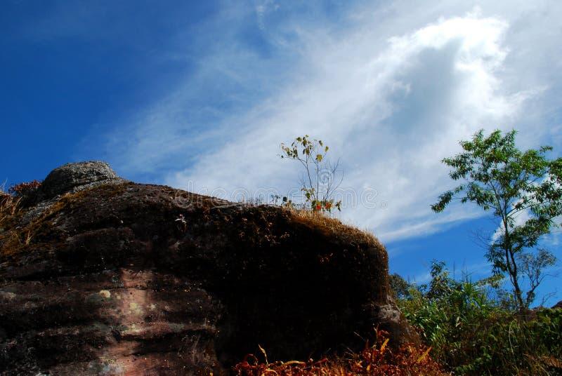 Skała w lesie z błękitnym niebem zdjęcie stock