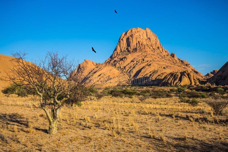 Skały i ptaki w pustynnym Namib fotografia stock