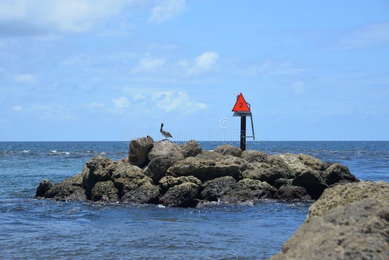 Skały przy usta Floryda ` s Boca wpust zapewniają sanktuarium dla gospodarza seabirds, wliczając pelikanów obraz royalty free