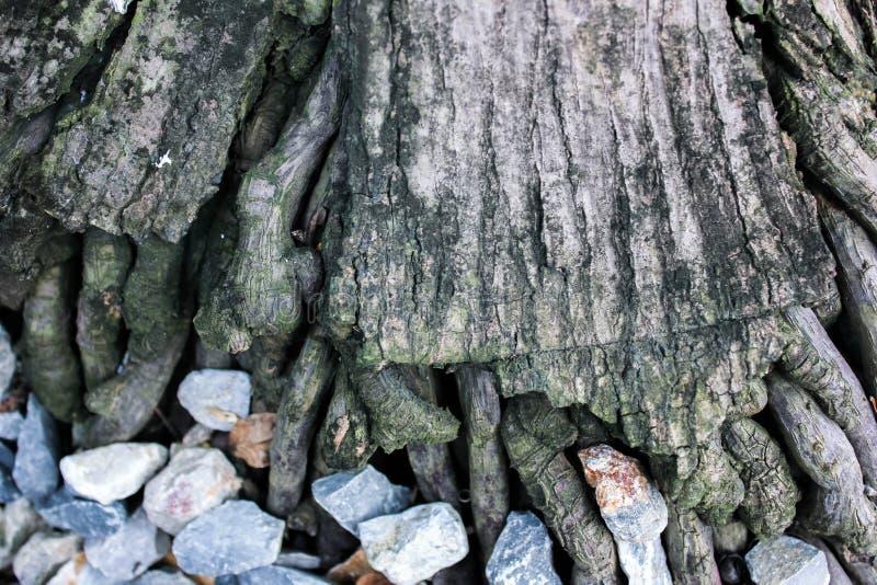 Skały zakrywać pod drzewami obrazy stock
