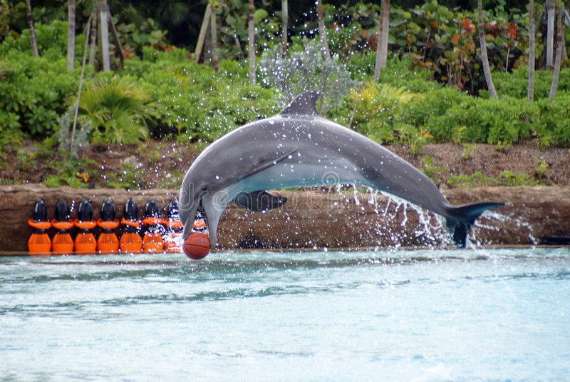 skaczący delfinów zdjęcie stock