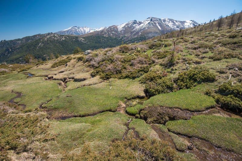 Skacze na mechatym skłonie w Korsykańskich wysokich górach fotografia royalty free