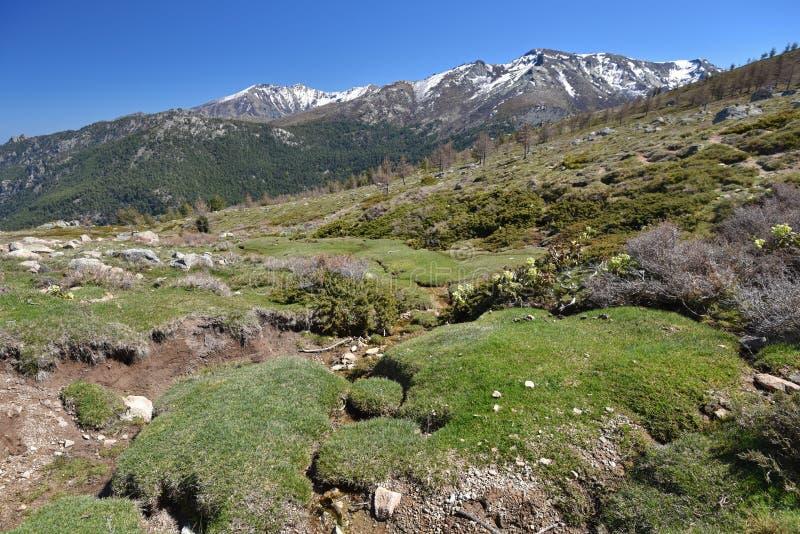 Skacze na mechatym skłonie w Korsykańskich wysokich górach zdjęcia royalty free
