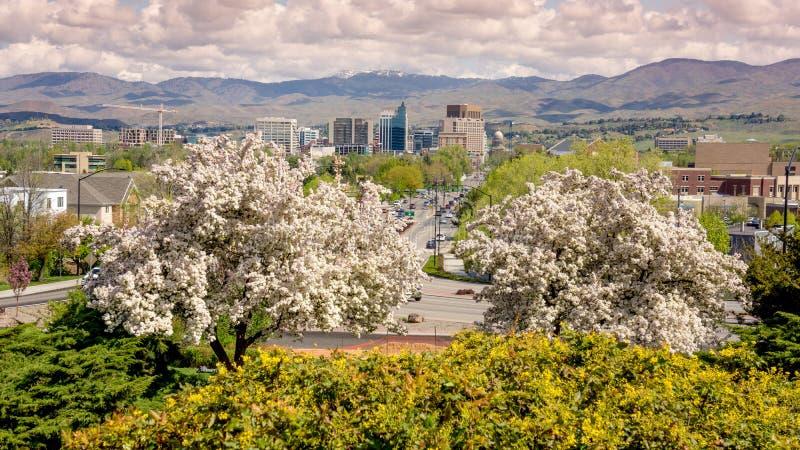 Skacze w mieście Boise Idaho z kwiatonośnymi drzewami obrazy stock