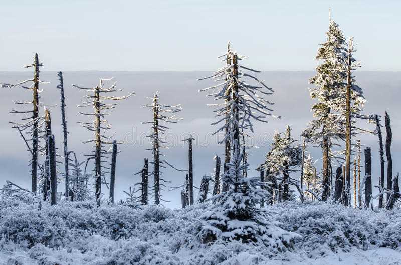 Skadade träd med inversion rider ut, jätte- berg arkivfoto