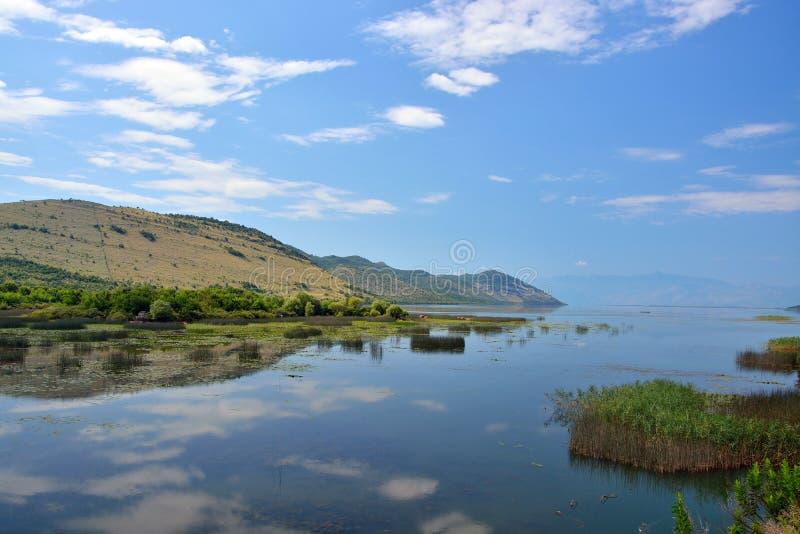Skadar湖- Skadarsko jezero 免版税库存图片