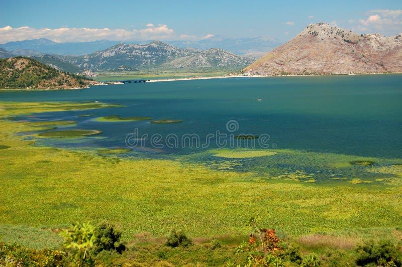 Skadarsko Jezero, Crna Gora image libre de droits