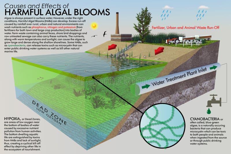 Skadlig Algalblom Infographic royaltyfri illustrationer