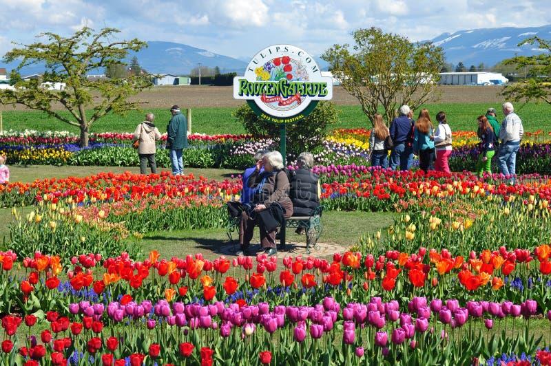 Skagit dal 2013 Tulip Festival royaltyfri bild