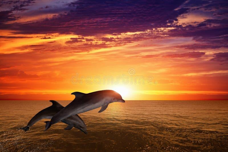 skakać delfinów obraz stock