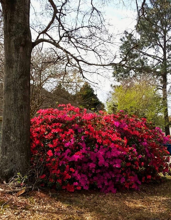 skakać wiosny fotografia royalty free