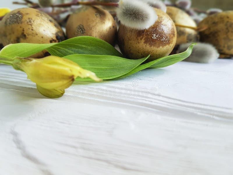 Skaka den härliga söndag för den tomma filialen för äggeaster G pilen på en vit träbakgrund för naturlig garnering, blommaalstroe royaltyfria foton