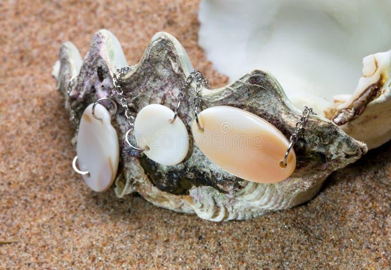 skal för hav för sa för exotiska lies för pärlor pärlemorfärg arkivbild