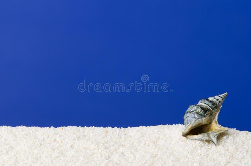 Skal för havssnigel på vit sand med ultramarine bakgrund royaltyfri fotografi