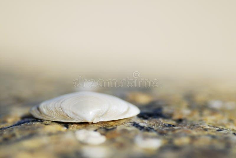 skal för sand för bildmakro en arkivbilder