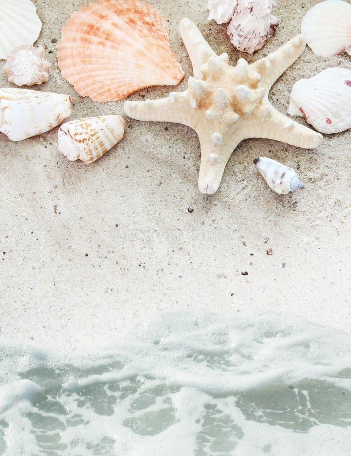 skal för strandkanthav arkivfoto