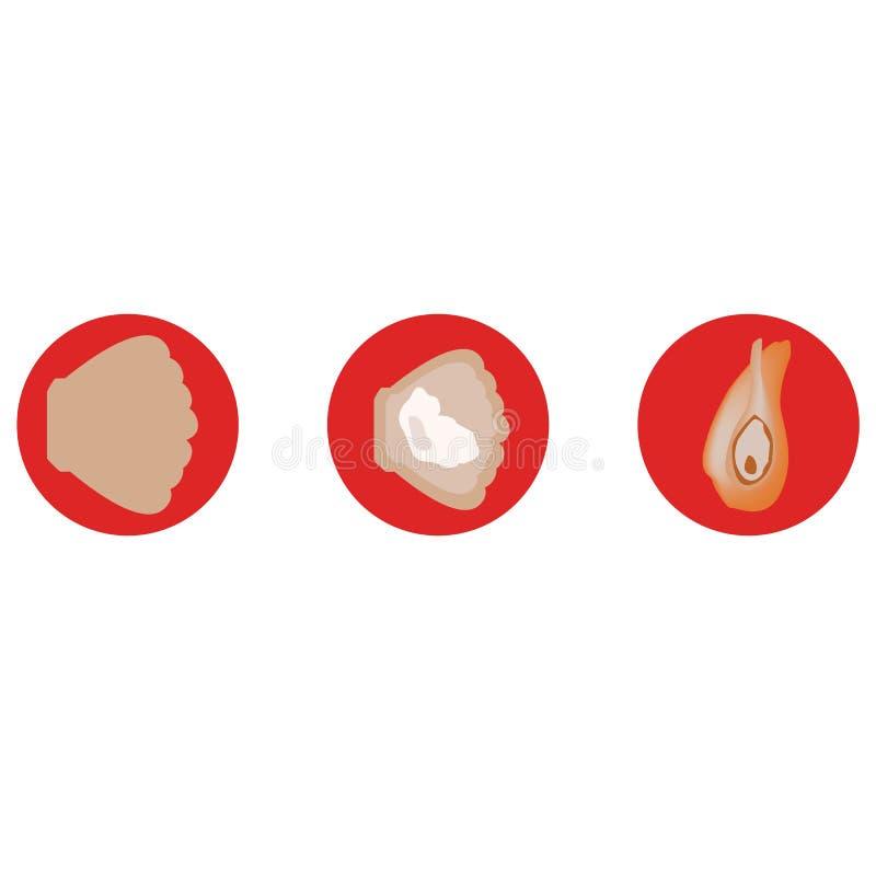 Skal för testicular hälsa vektorer stock illustrationer