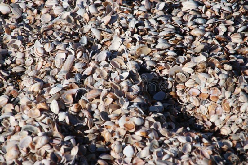 Skal från bubblor på stranden arkivfoton