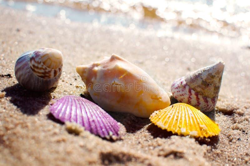 Skal i livliga färger på strandsand arkivbild
