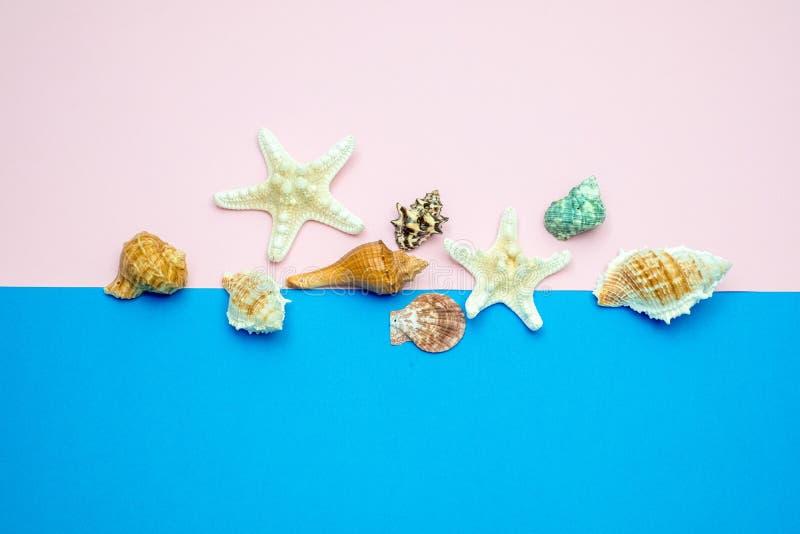 Skal och sjöstjärnor på blå och rosa bakgrund kopiera avst?nd f?r din text arkivbilder