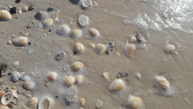 Skal på en sandig strand royaltyfria bilder