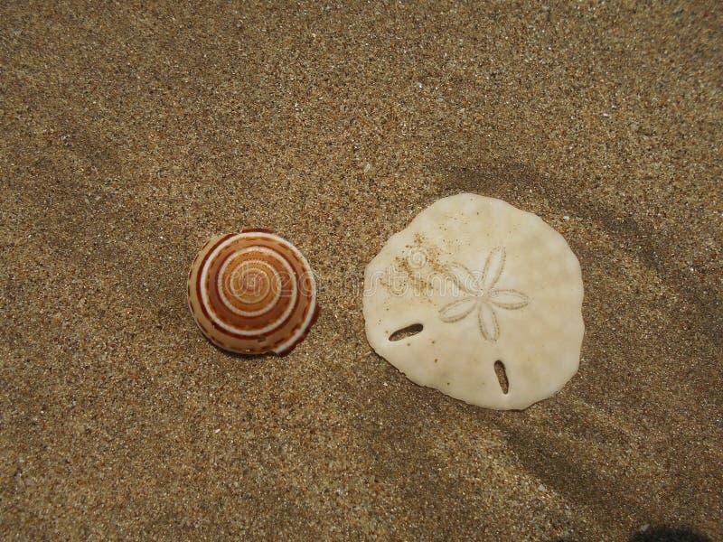 Skal på en tom strand arkivfoto