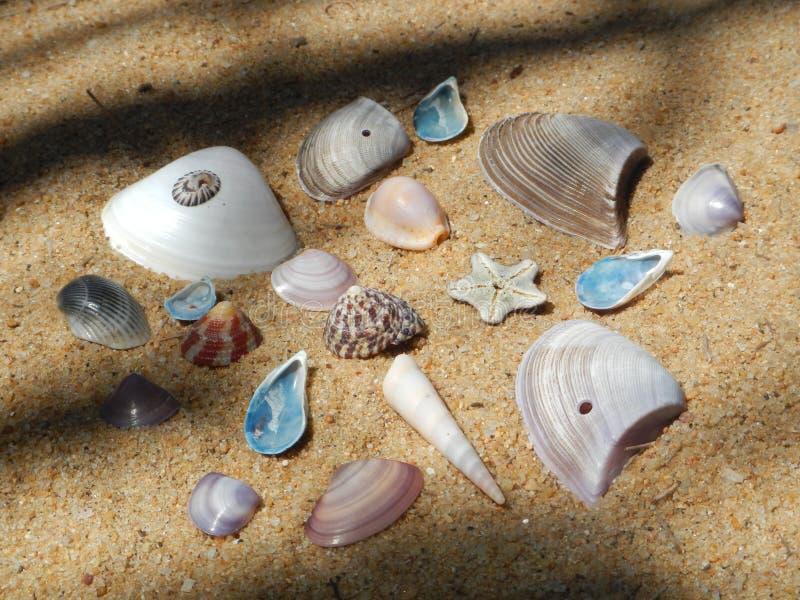 Skal som samlas på en strand i Sri Lanka arkivfoto