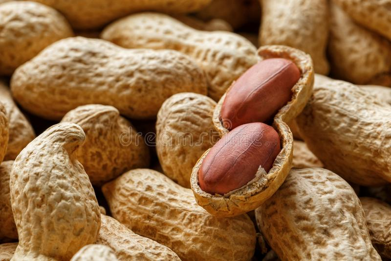 Skalad jordnöt på väl jordnötter Jordnötter for bakgrund eller texturer royaltyfri foto
