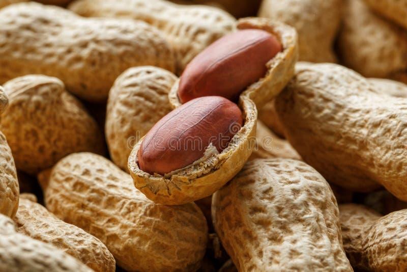 Skalad jordnöt på väl jordnötter Jordnötter for bakgrund eller texturer royaltyfri bild