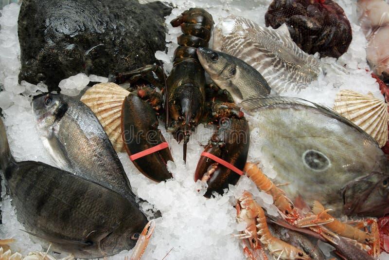 skaldjur fotografering för bildbyråer