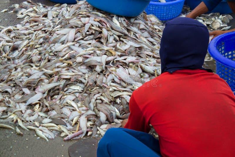 Skaldjur på fiskmarknaden royaltyfria foton