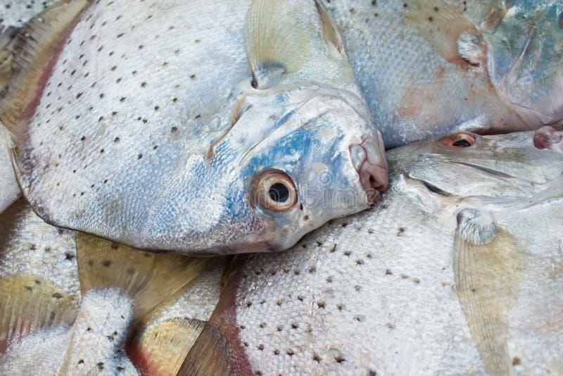 Skaldjur på fiskmarknaden arkivbild