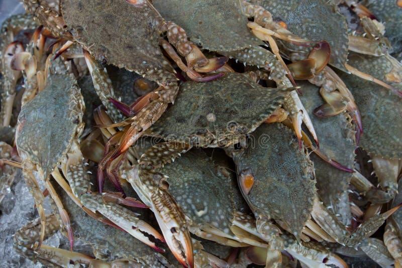 Skaldjur på fiskmarknaden arkivfoton
