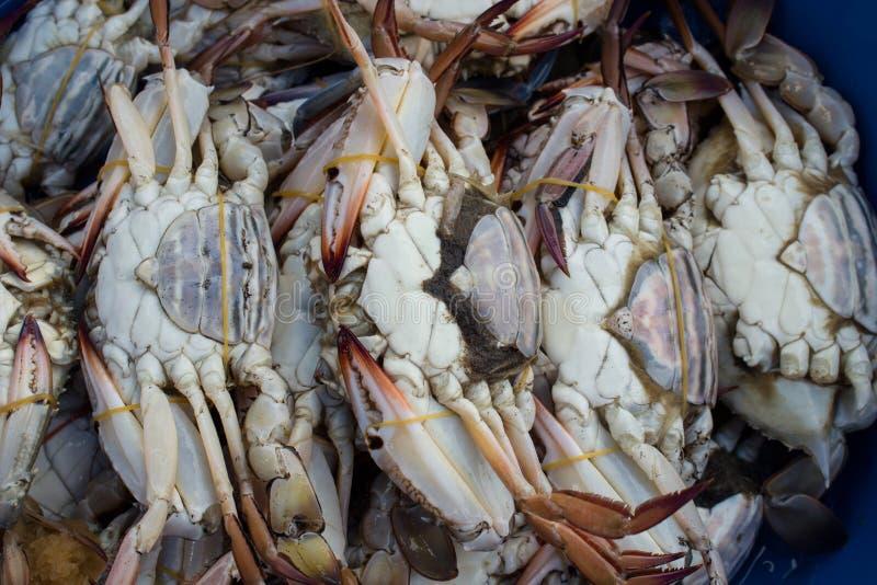 Skaldjur på fiskmarknaden arkivfoto